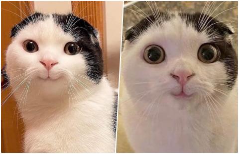 Tam mıncırmalık dediğiniz hayvan hangisi?