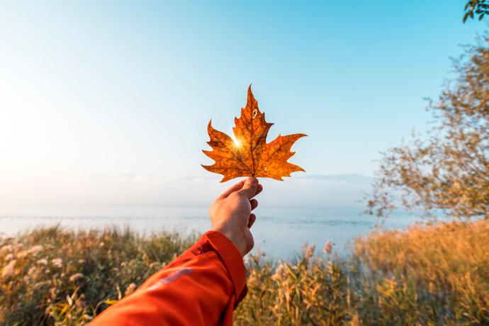 Bir yaprak olsanız rüzgar sizi hangi ülkeye ya da şehre gezintiye çıkarsın isterdiniz?