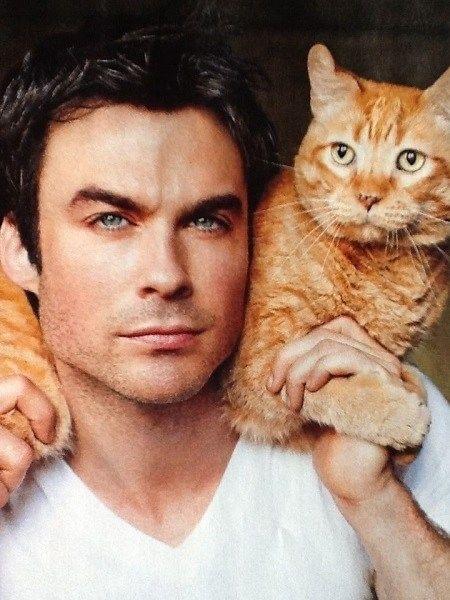 Kedi seven ve besleyen erkekler çekici değil mi sizce de 😍?