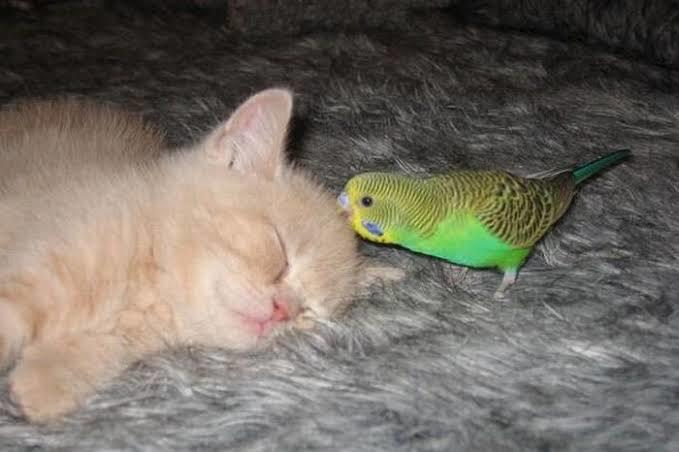 Yavru kuş ve yavru kediye aynı evde bakılır mı?