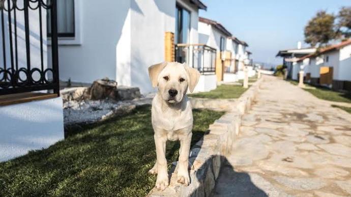 Tatilinizi evcil hayvanınız ile yapabilir misiniz?