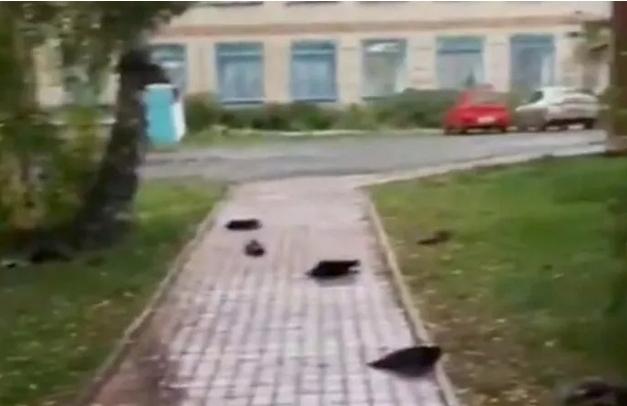 Rusyada uçarken düşen gizemli kuş ölümleri konuşuluyor! Sizce bu bir alamet mi?