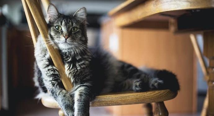 Covid testi pozitif çıkan kedilerin öldürülmesi hakkında ne düşünüyorsunuz?