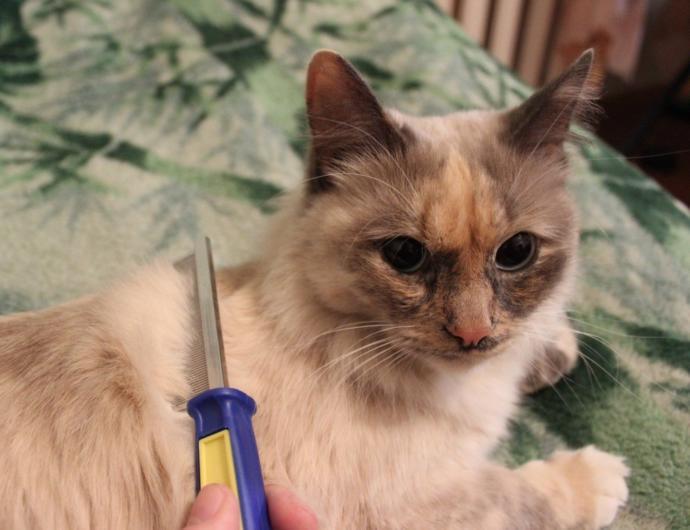 kedi yikanirmi