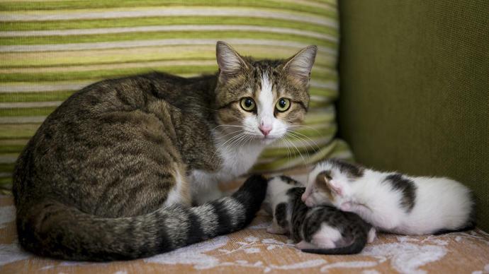 Kediler kaç yavru doğurur?