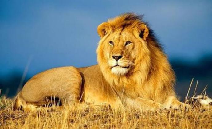 Ormanda Yasayan Bir Hayvan Olsaydin Hangi Hayvan Olmak Isterdin