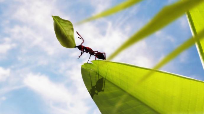Evdeki karıncaları öldürmeden nasıl yok edebilirim?