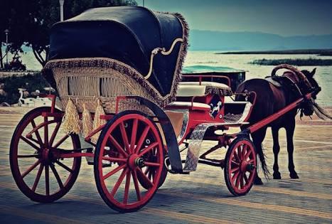Sizce fayton, atlara eziyet midir?